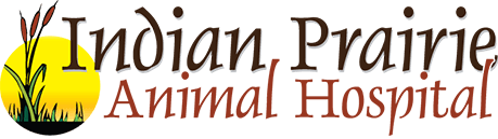 Indian Prairie Animal Hospital