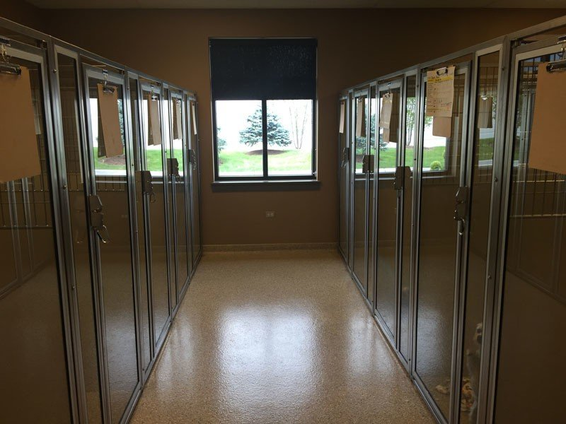 The canine boarding suites