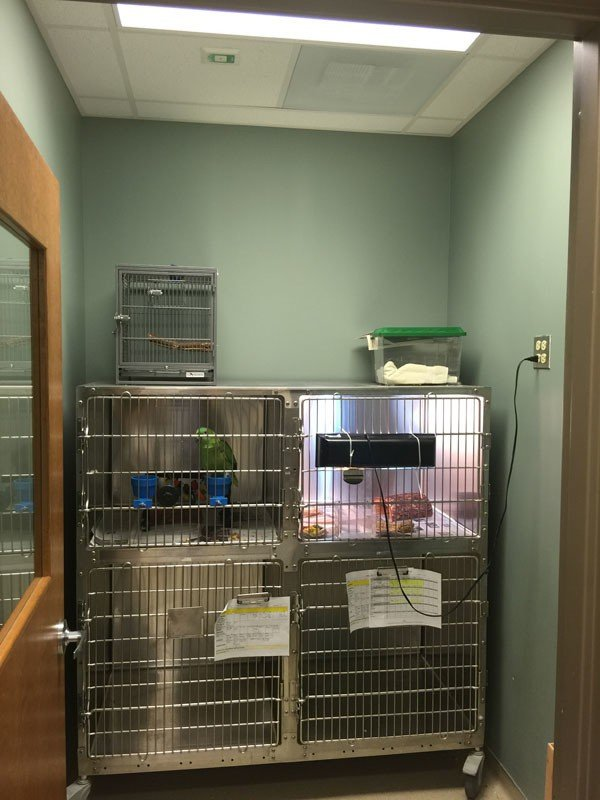 The exotic pet boarding room. We see both a bird and a reptile being boarded here
