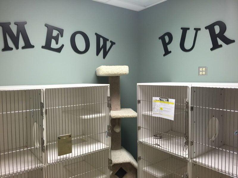 Feline Boarding Room
