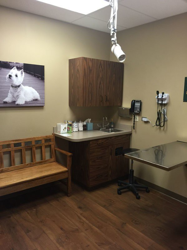 The small dog exam room