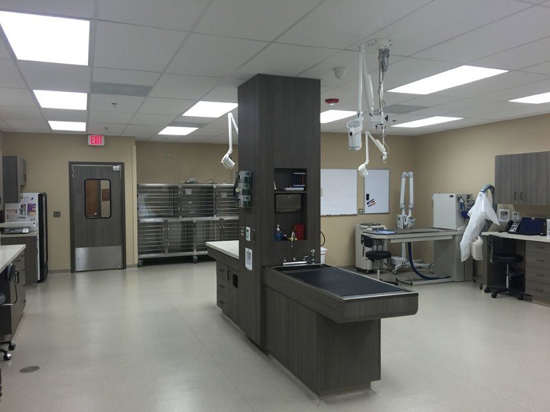 The treatment area in Indian Prairie Animal Hospital
