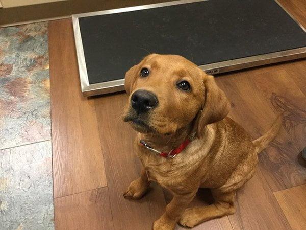 Dog Training Classes Indian Prairie Animal Hospital